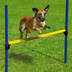 Agility Hundesport
