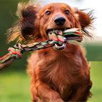 Outdoor-Zubehör für Hunde