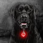 Mit dem Hund sicher in der Dunkelheit unterwegs
