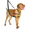 Antibellhalsband und Erziehung für Hunde