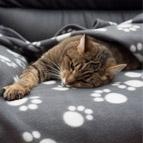 Katzendecke